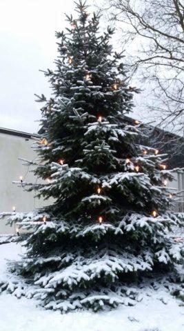 Weihnachtsbaum vor Rudolf-Wöhrl-Pavillon