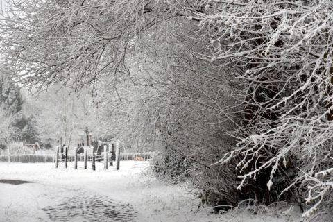 Mainweg im Schnee, Großwelzheim