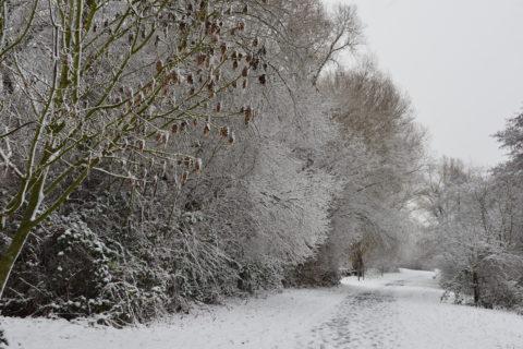 Mainweg im Schnee, Dezember 2014